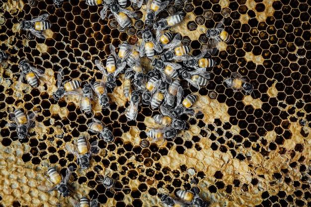 Panal con fondo de abeja Foto Premium