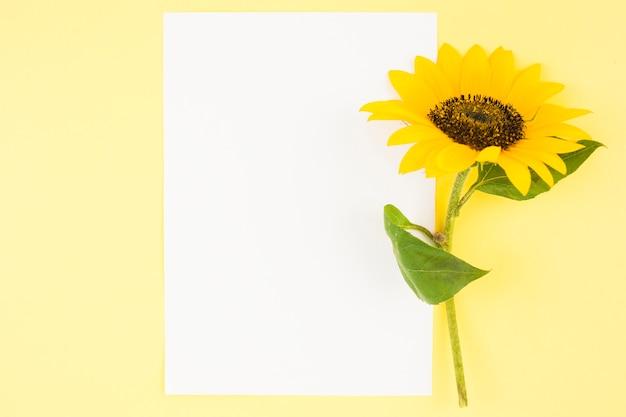 Papel en blanco blanco con girasol hermoso sobre fondo amarillo Foto gratis