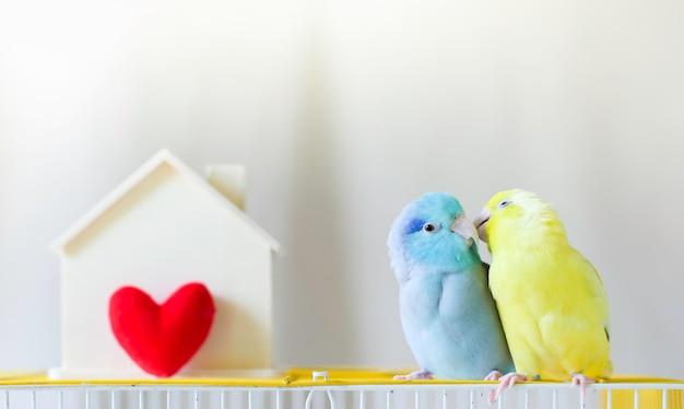 Par de little loro está sentados juntos cerca de casa con el corazón rojo. Foto Premium