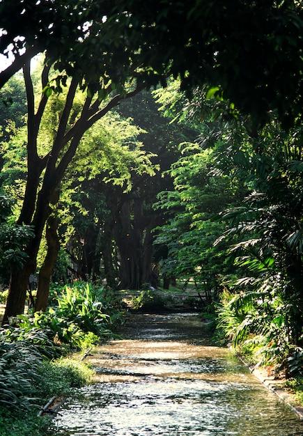 Parche a través de un bosque verde Foto gratis