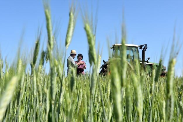 Pareja de agricultores en un campo de trigo con un tractor Foto Premium