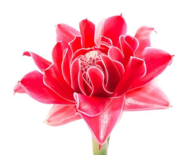 La Parte Superior Muy De Cerca Flor De Amor Descargar