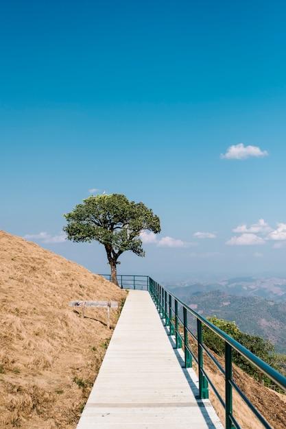 Paseo a arbol y cielo azul Foto gratis