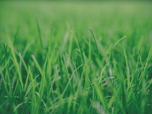 Pasto verde iluminado por el sol ambiente natural auténtico prado Foto Premium