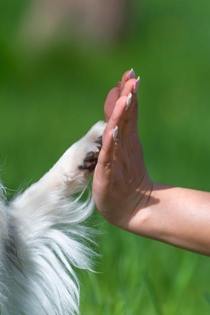 Pata blanca de un perro y la mano de un hombre en verde Foto Premium