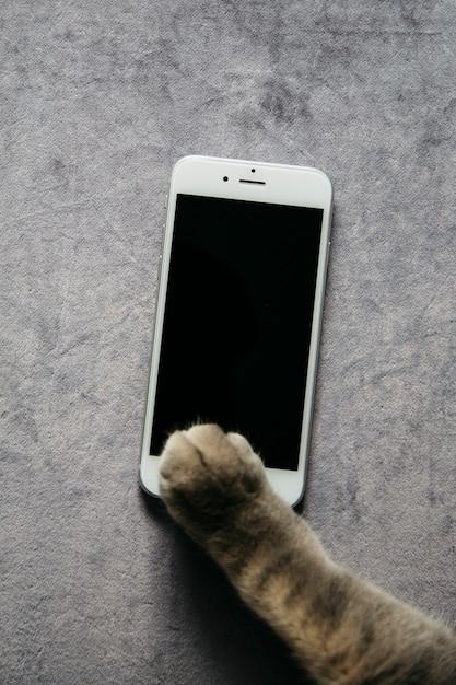 Pata de gato con smartphone. Foto gratis
