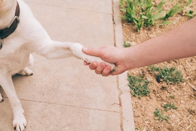 Pata de perro y mano humana. Foto gratis