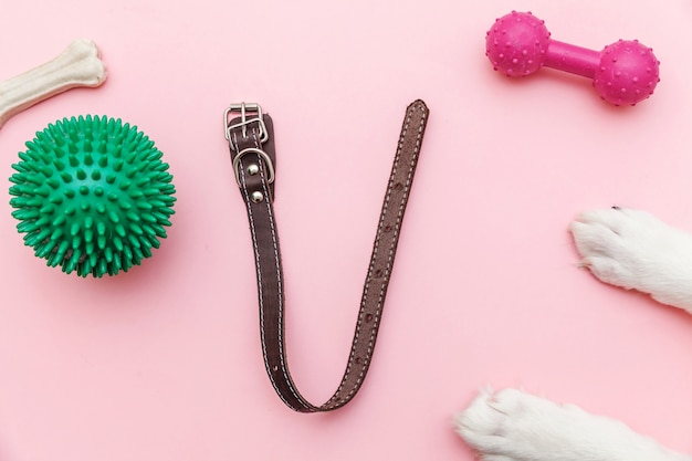 Patas de perro, juguetes y accesorios para jugar y entrenar. Foto Premium