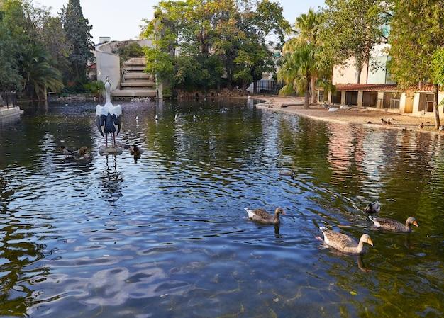 Patos en el parque viveros de estanque de valencia. Foto Premium