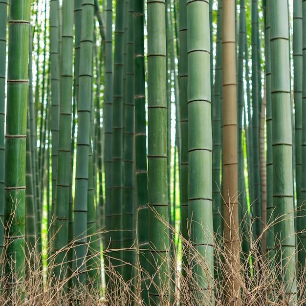 Patrón de bosque de bambú Foto Premium