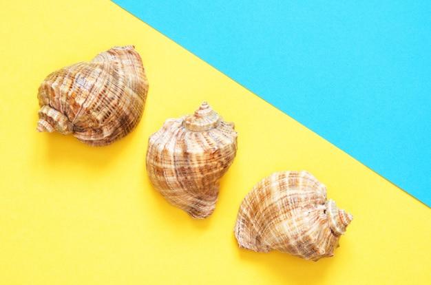Patrón de conchas de mar sobre fondo de papel turquesa y amarillo. concepto de verano Foto Premium