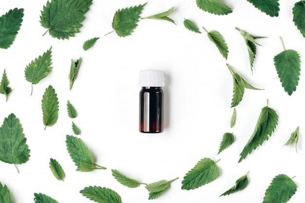 Sin patrón de ortiga fresca, menta y botella de aceite esencial en Foto Premium