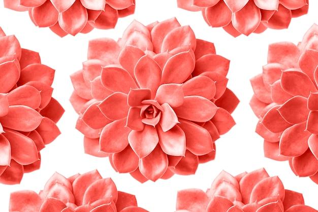 Patrón de planta suculenta en color coral vivo aislado en blanco Foto Premium
