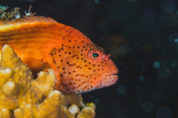 Peces exóticos nadando en agua dulce. Foto gratis