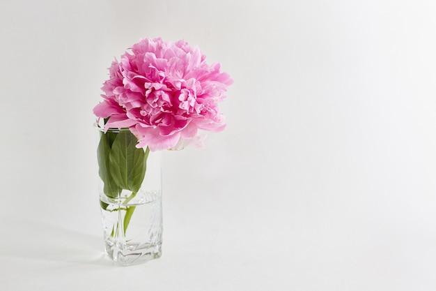 Peonía en un vaso sobre blanco Foto Premium