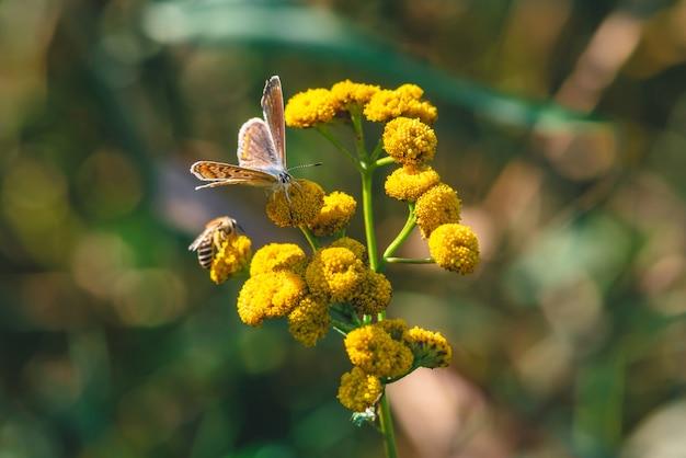 Pequeña mariposa naranja en flor silvestre amarilla Foto Premium