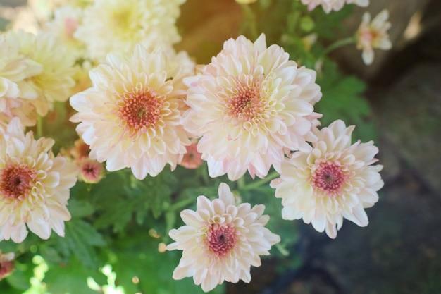 Las pequeñas flores blancas hermosas del verde se van en la luz del sol del tiempo de verano. enfoque suave. Foto Premium