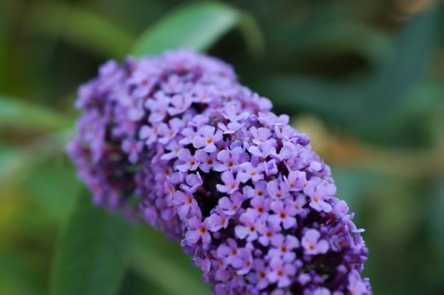 peque as flores de color violeta descargar fotos gratis. Black Bedroom Furniture Sets. Home Design Ideas