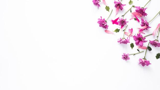 Pequeñas flores moradas con pétalos esparcidos sobre mesa. Foto gratis