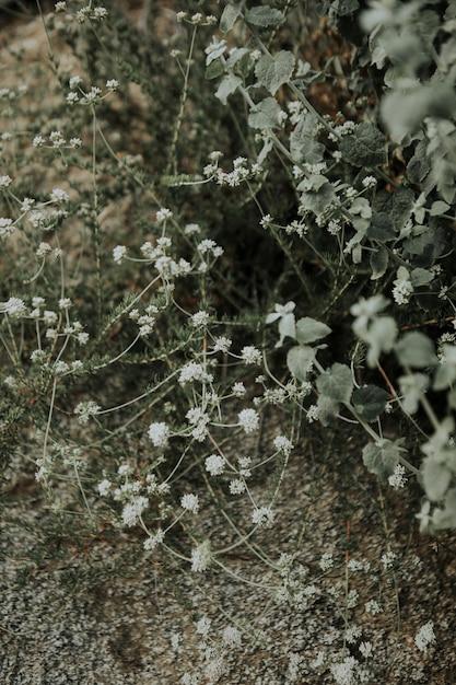 Pequenas Flores Silvestres Blancas Con Suelo Seco Descargar Fotos