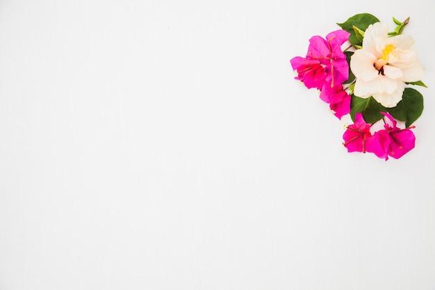 Pequeñas Flores Sobre Fondo Blanco