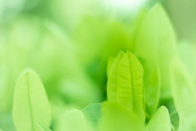 Las pequeñas ramas están creciendo con el negocio. Foto Premium