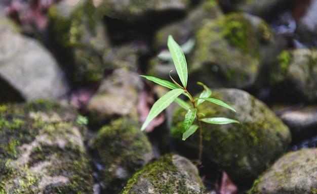 Pequeño árbol de plantas que crece en la piedra de roca cerca de la naturaleza del río de la corriente Foto Premium
