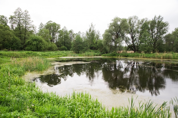 Pequeño estanque salvaje Foto Premium