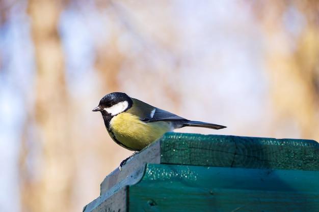Pequeño pájaro amarillo en la cerca en parque. pájaro de teta en rusia. fondo de la fauna. Foto Premium