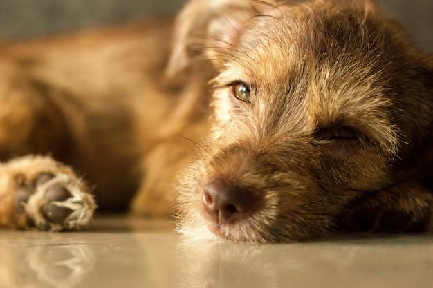 Perezoso bebé perro mascota quiere dormir Foto Premium
