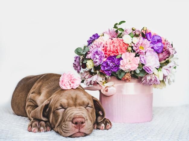 Perrito encantador y un ramo de flores frescas Foto Premium