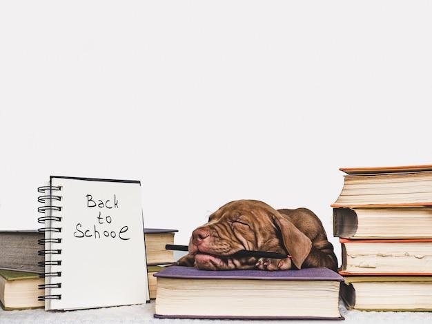 Perrito lindo y libros antiguos. de vuelta a la escuela Foto Premium