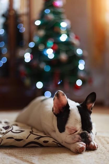 Perro al lado del árbol de navidad. Foto Premium