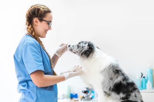 Perro de alimentación veterinario femenino sonriente en la clínica Foto gratis