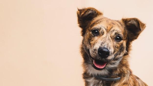 Perro amigable con espacio de copia de lengua afuera Foto gratis