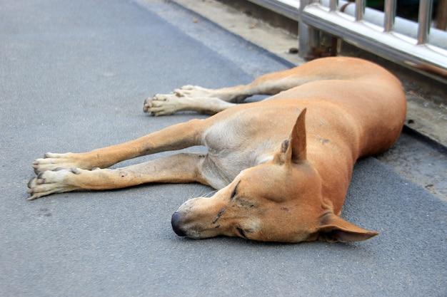 Perro callejero dormir en el suelo