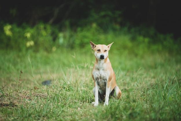 Perro caminando por un camino de tierra del país Foto gratis