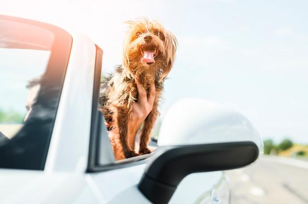 Perro feliz viajando en primer plano Foto gratis