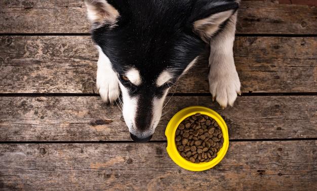 Perro hambriento acostado cerca de un plato de comida Foto Premium