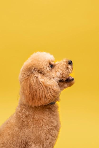 Perro lindo doméstico Foto gratis