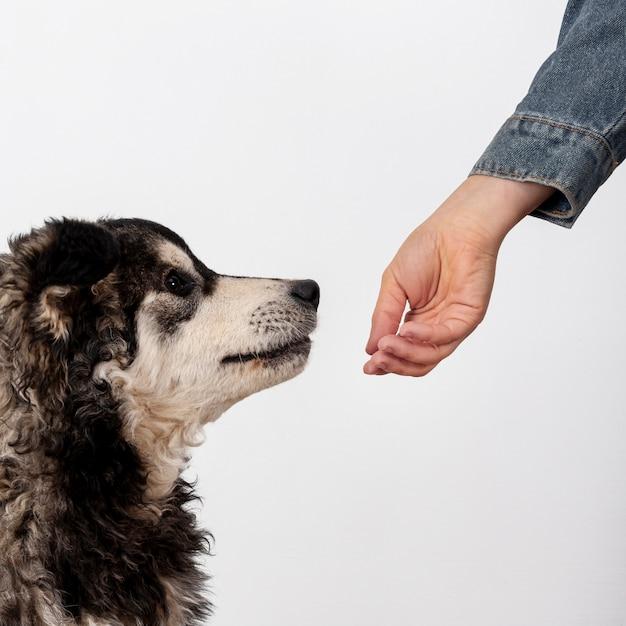 Perro lindo olfateando la mano del propietario Foto gratis