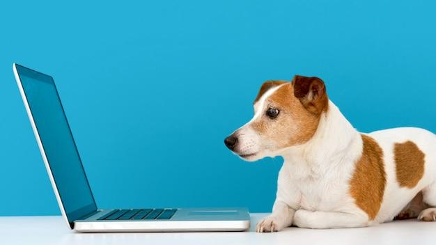 Perro mirando portátil con interés Foto Premium
