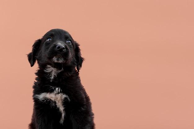 Perro negro sobre fondo rosa Foto gratis