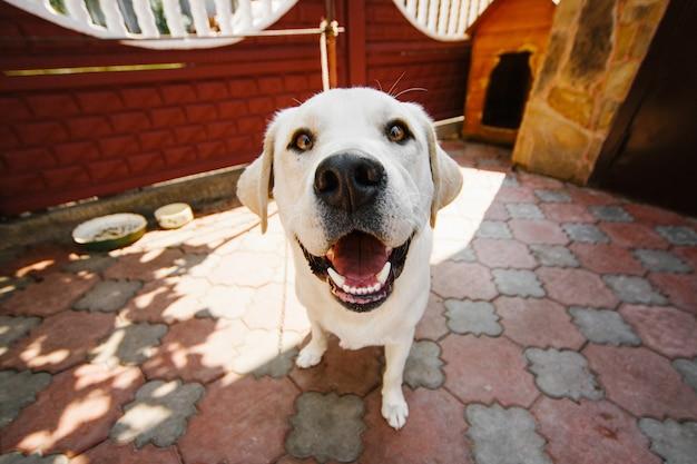 Perro con ojos amarillos profundos se encuentra en la cadena Foto gratis