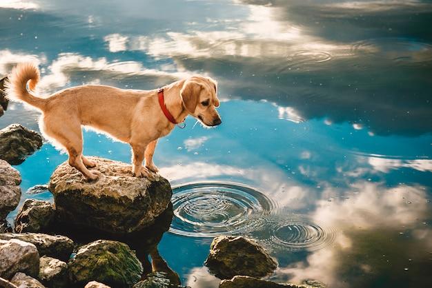 Perro parado junto al agua Foto Premium
