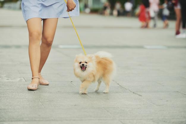 Perro paseando por la ciudad Foto gratis
