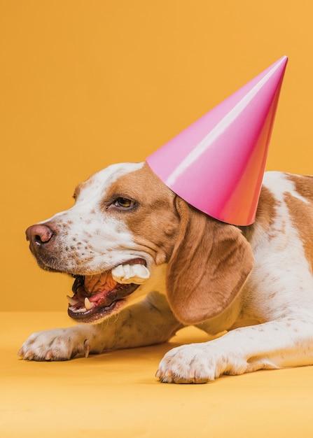 Perro con sombrero de fiesta y comiendo un hueso Foto gratis