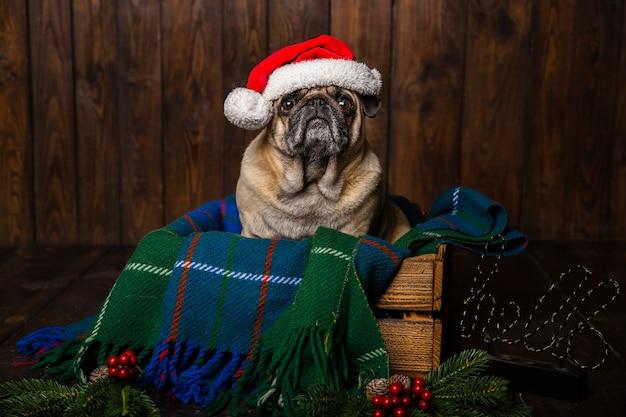 Perro con sombrero de santa en ataúd de madera con adornos navideños al lado Foto gratis