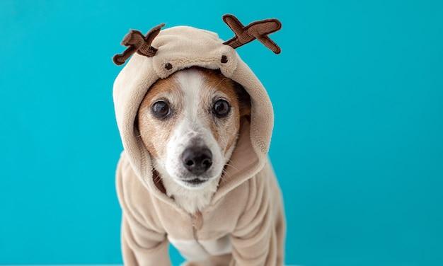 Perro con traje de ciervo de navidad Foto Premium