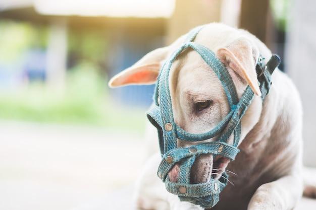 Un perro triste con un hocico tirado en el suelo junto a la puerta de la casa al aire libre Foto Premium